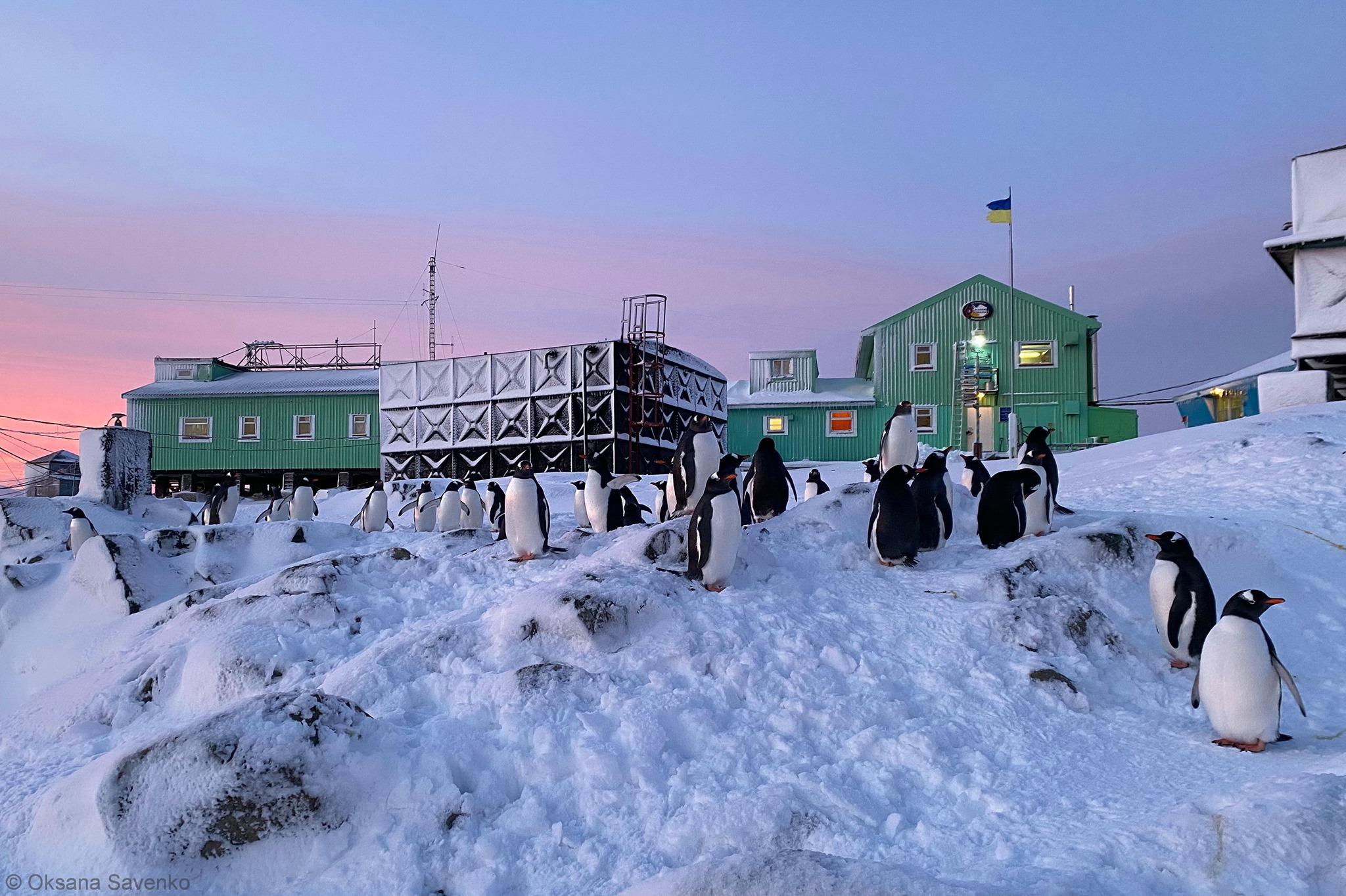 Фото — национальный антарктический научный центр_3