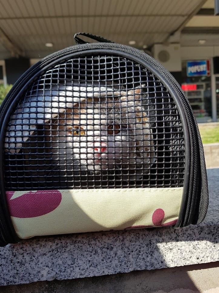 Кошка переезжает